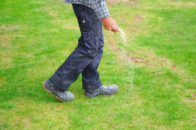 В сентябре газоны подкармливают специальным осенним удобрением