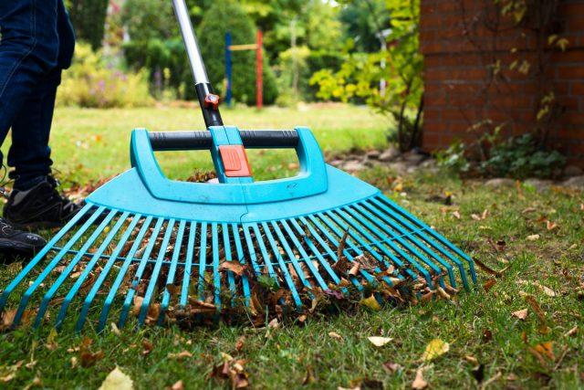 Поддерживать газон чистым— главная задача осенью