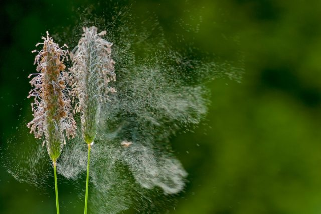 13 фактов о пыльце растений, которые вас удивят