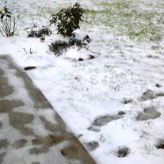 В некоторых регионах зимой снега и на грядку накидать не соберёшь