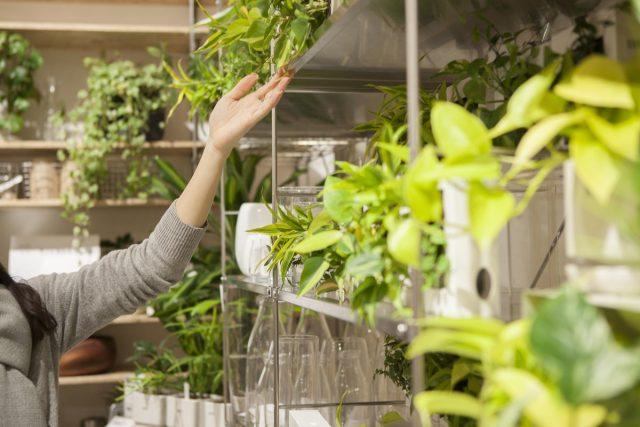 Любые признаки того, что растение в лавке не получает необходимых условий, должны служить поводом для отказа от покупки