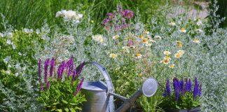 Как правильно ввести лекарственные травы в сад?