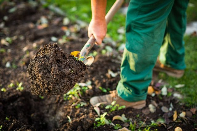 Перед началом любых посадок необходимо познакомиться с почвой