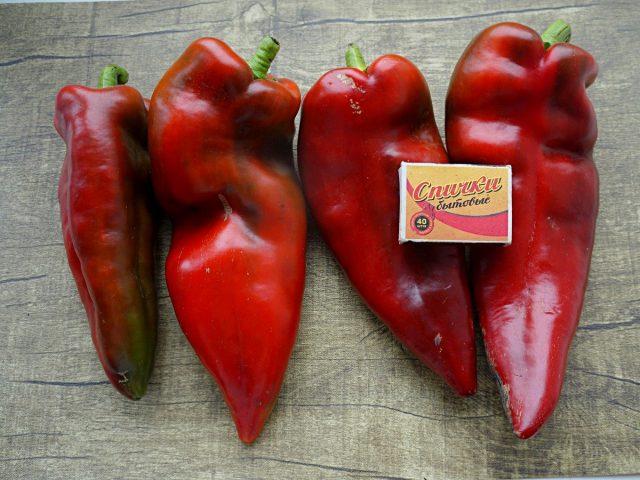 Сладкий перец «Паланичко Чудо» (Palanacico cudo)
