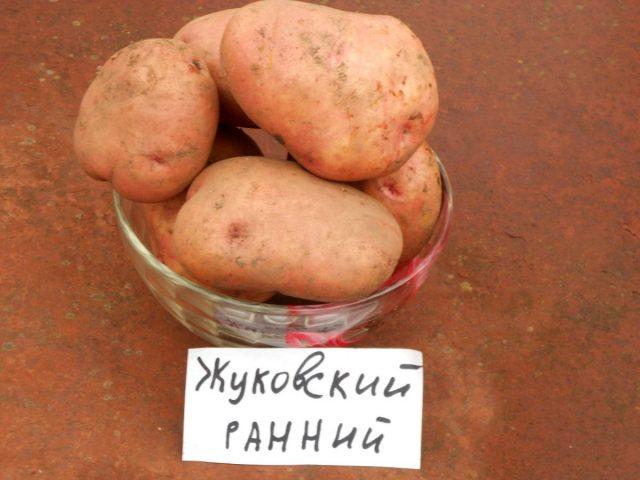 Картофель «Жуковский»