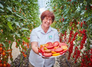 Устойчивые томаты