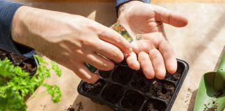Лунный календарь садовода и огородника на январь 2021