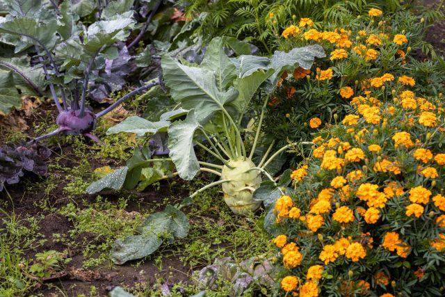 Овощи и цветы на грядке