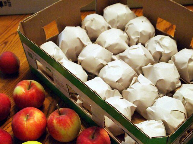 Особенно помогает бумага, если яблоки нужно куда-то переслать или перевезти