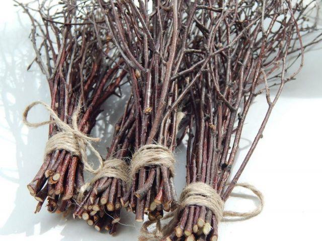 Одним из способов хранения капусты когда-то были березовые ветки