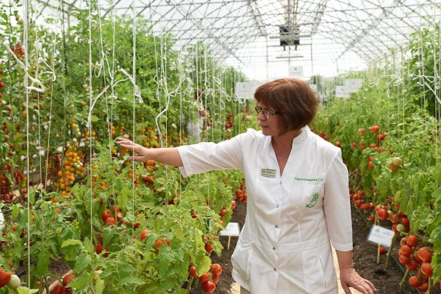 Грядка Здоровья — полезные овощи от компании Поиск