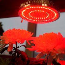 Фитосвет красный для созревания и цветения