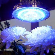 Фитосвет синий для усиления роста