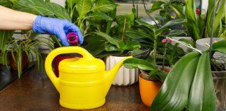 Правила подкормки комнатных растений — как это делать правильно