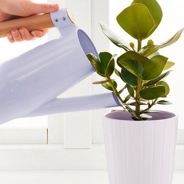Талая-вода для полива комнатных растений