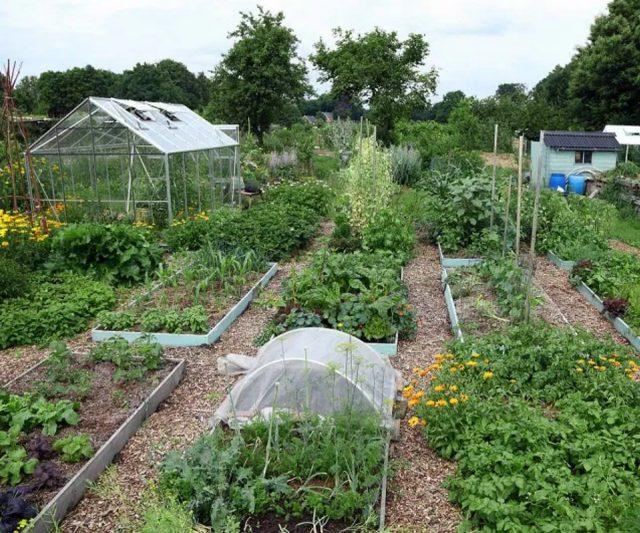 Загородный участок - гордость садовода