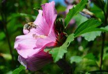 Лучшие декоративные растения-медоносы в нашем саду
