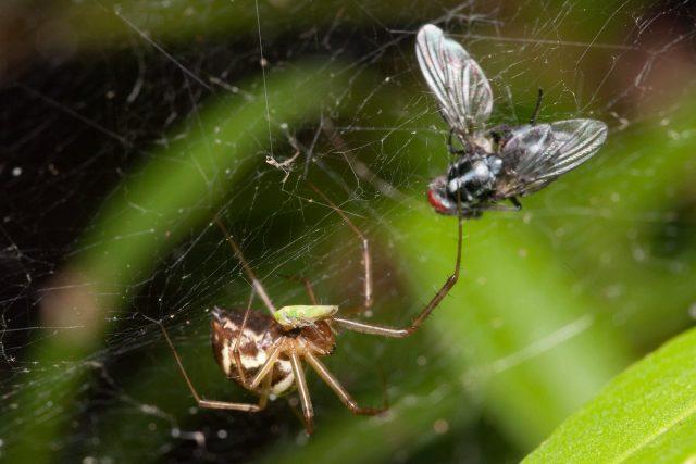 Ежегодно пауки изводят более полмиллиарда тонн насекомых