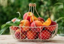 Персик в средней полосе — опыт выращивания