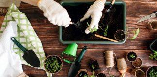 Как упростить выращивание рассады, если у вас мало времени?