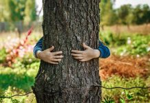 Какие деревья помогают нам сохранить здоровье?