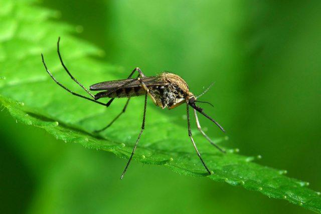 15 интересных фактов о комарах, которые вас удивят