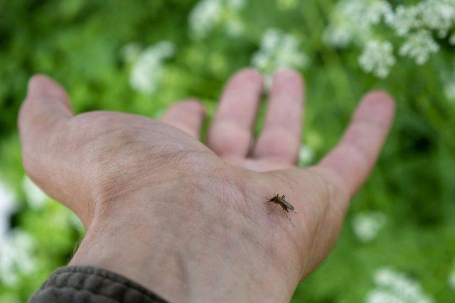 Комары очень чувствительны к запахам, выделяемым нашими железами