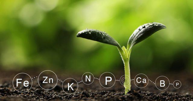 Только те комплексные удобрения, в которых микроэлементы содержатся в хелатной форме, могут дать растениям все микроэлементы