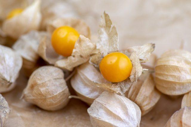 Самые вкусные ягоды физалиса— упавшие сами