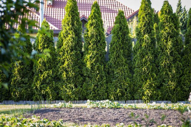 8 деревьев, которые смогут расти в полной тени