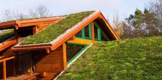Сад на крыше — правила обустройства и ухода