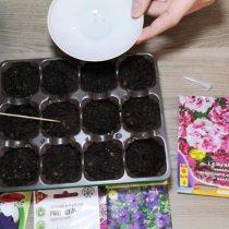 Высеваем семена петунии на торфяные таблетки