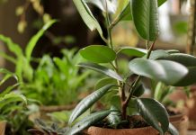 Профилактика вместо экстренных мер — как защитить комнатные растения