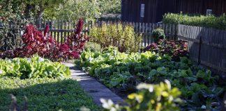Какие овощи смогут расти и давать урожай в полутени?