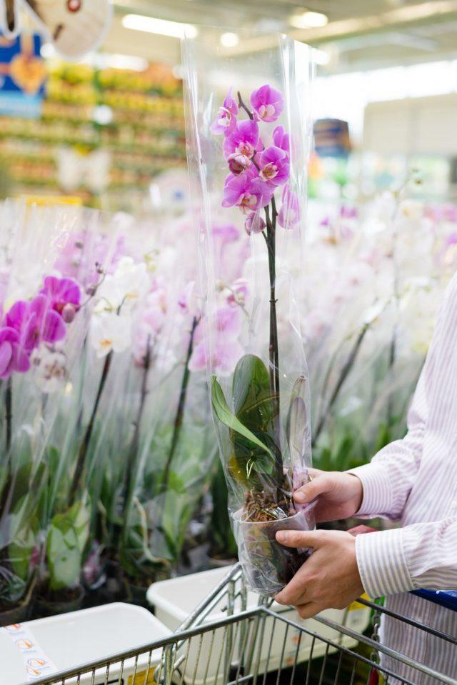 Самое главное при покупке орхидеи для дома— знания