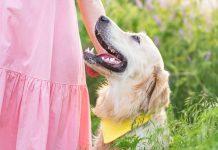 Какую породу собаки выбрать семье с маленьким ребенком?