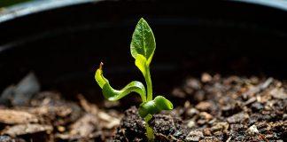 Скрученные листья — приговор или просьба о помощи?