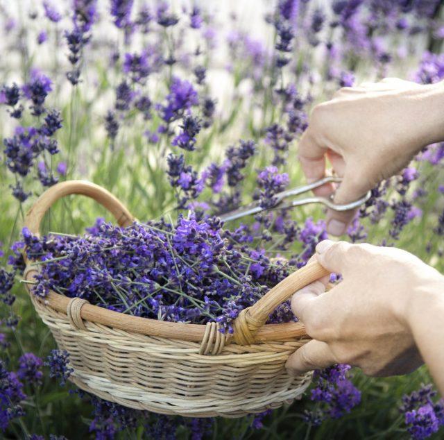 Сад - лекарь не только душевных, но и физических недугов