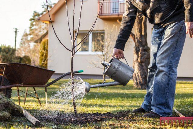 Важный стимул обзавестись садом — это желание о ком-то заботиться