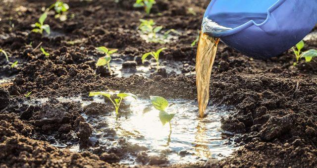 Подкормка растений навозной жижей