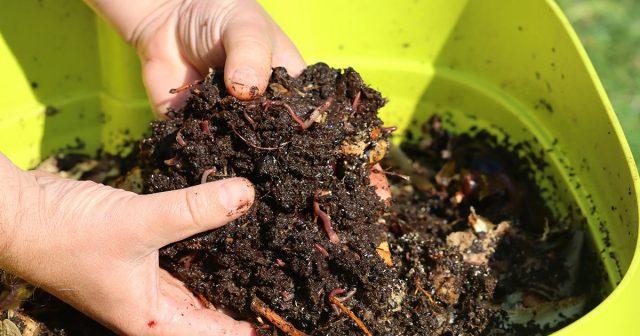Полезный для растений компост