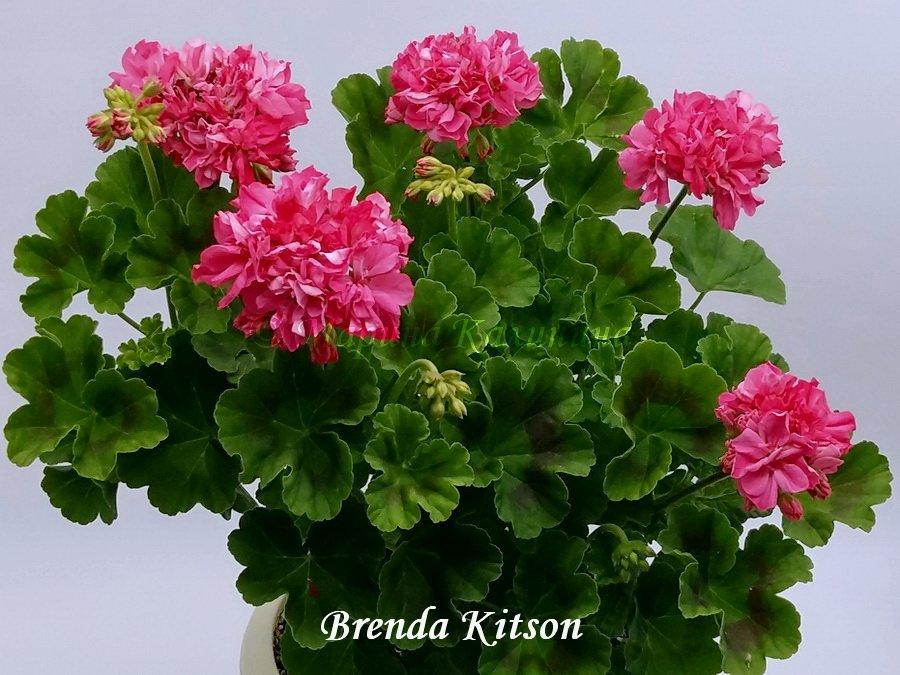Brenda-Kitson2