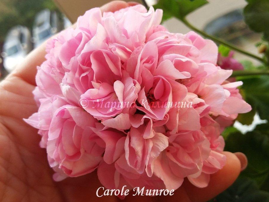 Carole-Munroe
