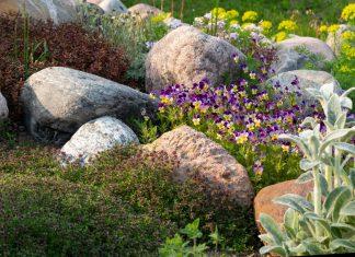 Камни-валуны в саду — идеи и правила оформления участка
