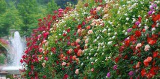 Миксбордер — оригинальная цветочная композиция