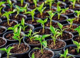 Секреты выращивания, с которыми рассада под защитой