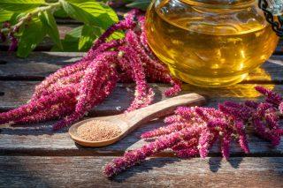 Амарант — съедобное и лекарственное растение