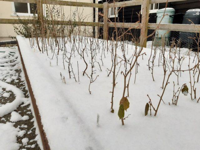 Зимовать в школке растениям гораздо комфортнее, чем высаженными на постоянное место