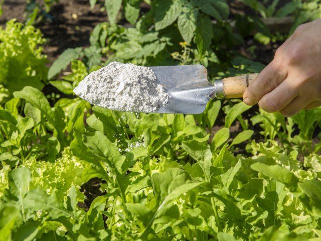 Диатомит, или кизельгур — органический пестицид для борьбы с вредителями