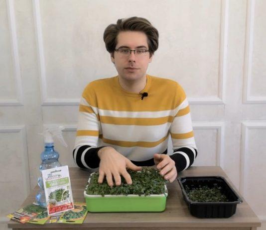 Как развивается микрозелень?